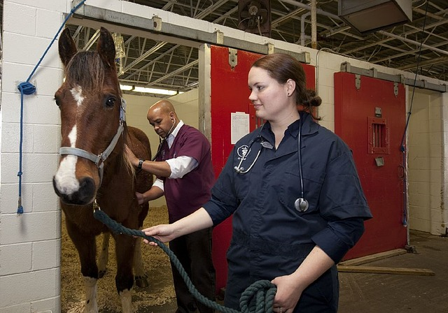 Curso Asistente técnico veterinario ecuestre y cuidador de caballos